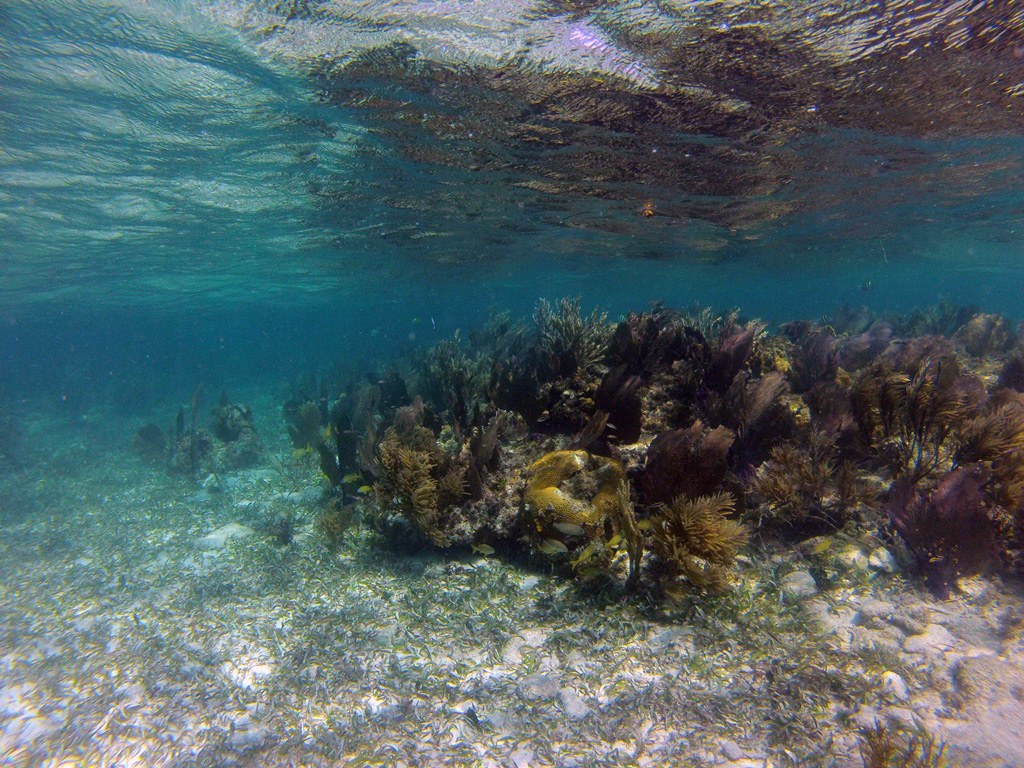 Healthy reef around the cay